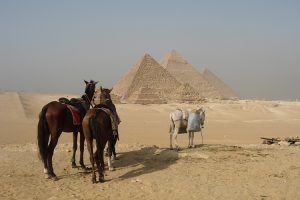 zwei Pferde vor den Pyramiden von Gizeh